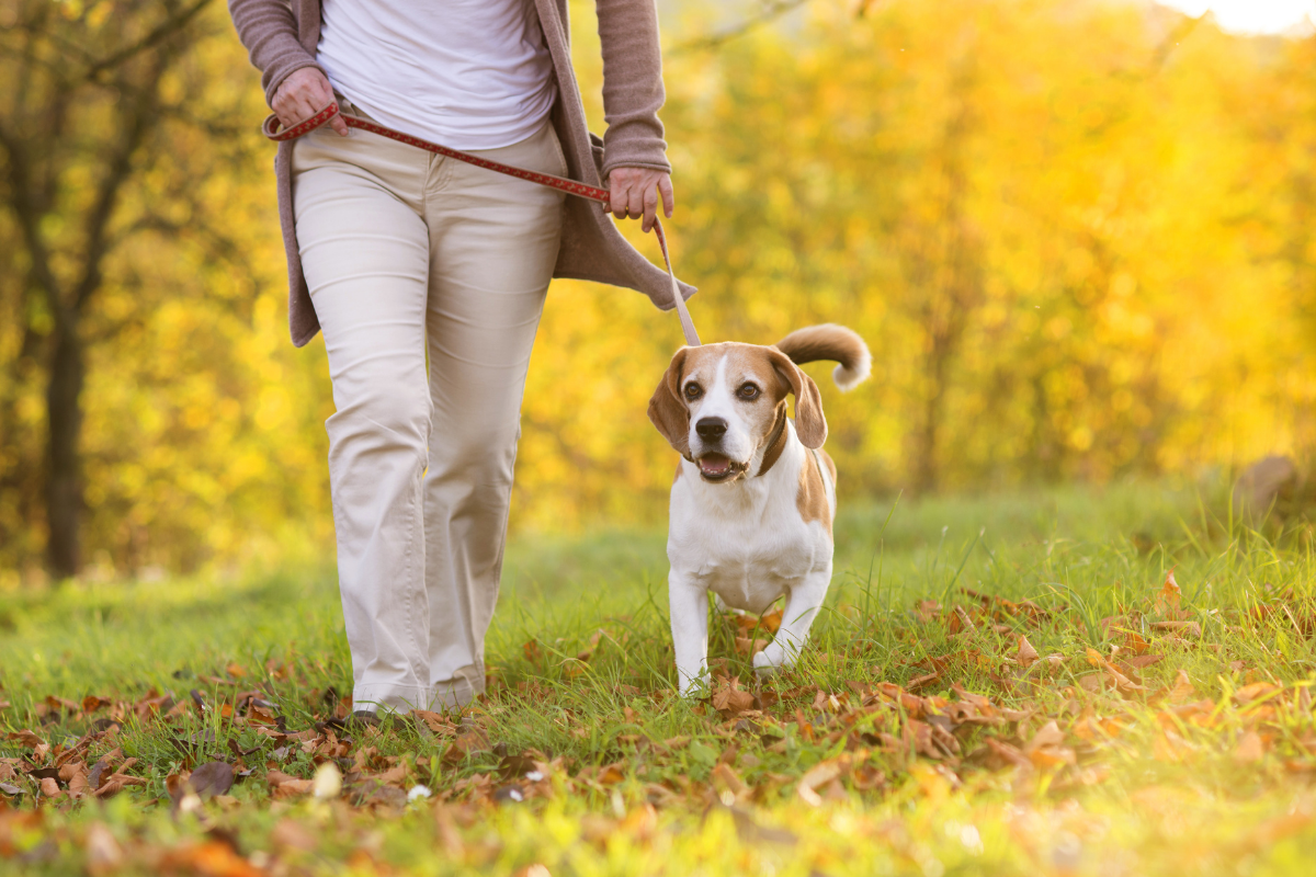 Dog friendly walking routes Haydock